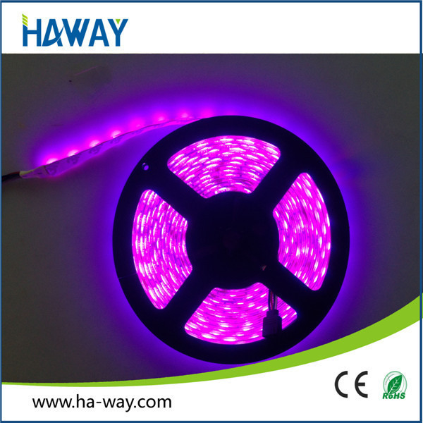 Customized 20W 3014 5050 60leds Dc12v Ip65 Waterproof 12v purple Led Strip