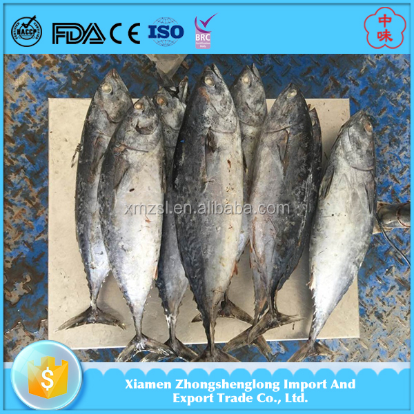 Best Price Frozen Aquatic Product Whole Round Bonito Fish With Size 750g+