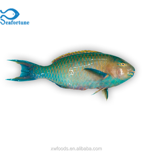 Fresh frozen cheap gutted scaled whole round Parrot fish