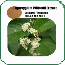 wild thunder god vine extract tripterine or celastrol