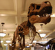 DW-0876 Science Museum Artificial Dinosaur Fossils Exhibit Life Size T-rex Skeleton for Sale
