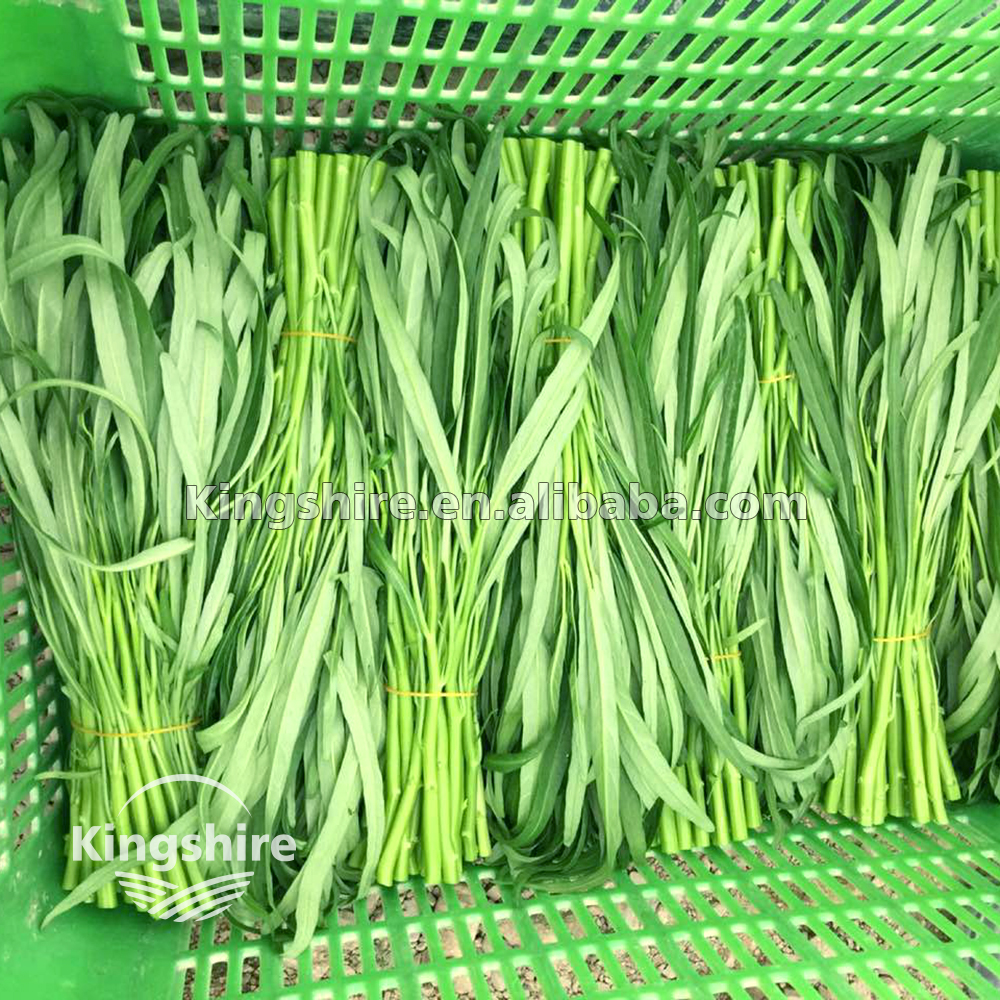 Kingshire Small Stem Small leaf Green Lance Leaf Water Spinach Seed