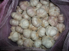 Normal White Garlic-- Bulk Garlic Golden Garlic Seller
