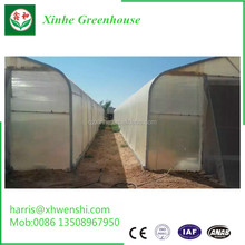 Hot galvanized steel frame poly high tunnel tomato greenhouse agricultural
