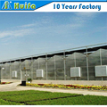Strong steel frame polycarbonate sheet greenhouse for vegetable