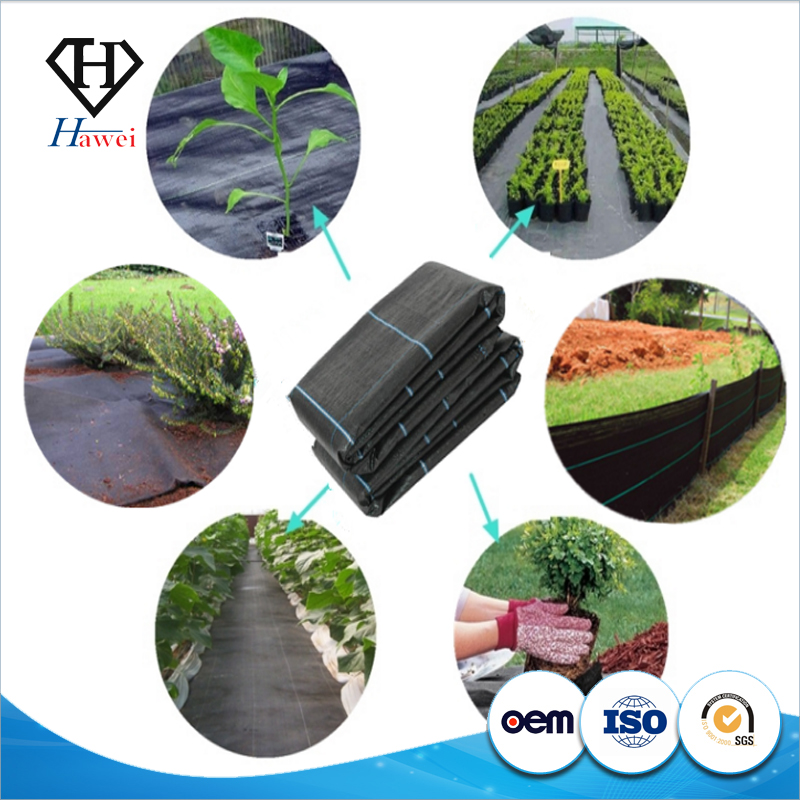 Factory Supply PP Woven Weed Control Mat / Ground Cover Mesh Fabric / Agricultural Black Plastic Ground Cover