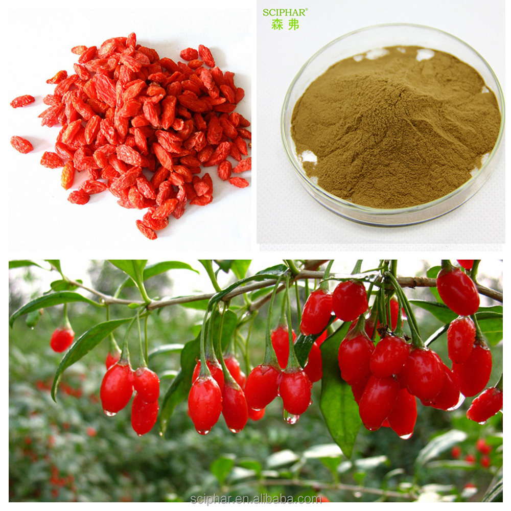 Natural Wolfberry Extract Goji berry Extract HALAL Certificates Sex inprovement