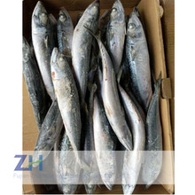 Sea frozen scomber japonicus pacific mackerel for can food
