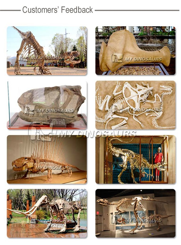 MY Dino-N121 Artificial maroc creuser dinosaur jouets fossiles for Anusement decoration