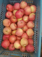 High Quality Yantai Fushi Apple / chinese apple / Fresh Apple