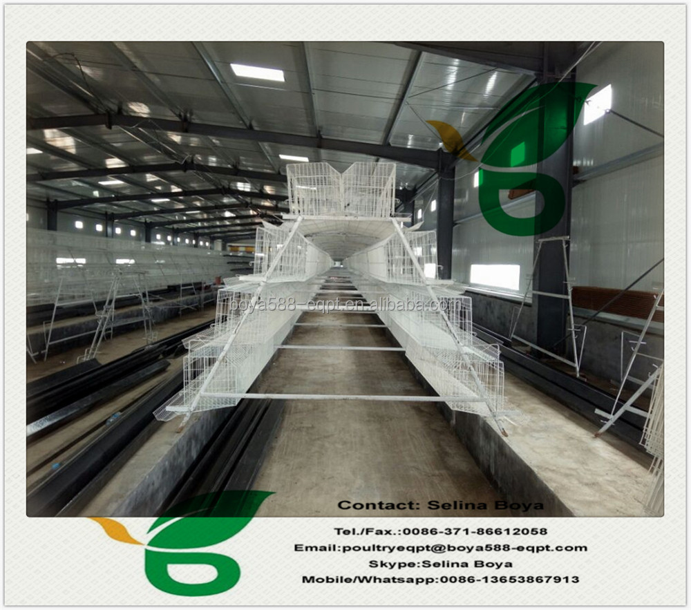 Automatic design layer cage for quail poultry equipment hot sale