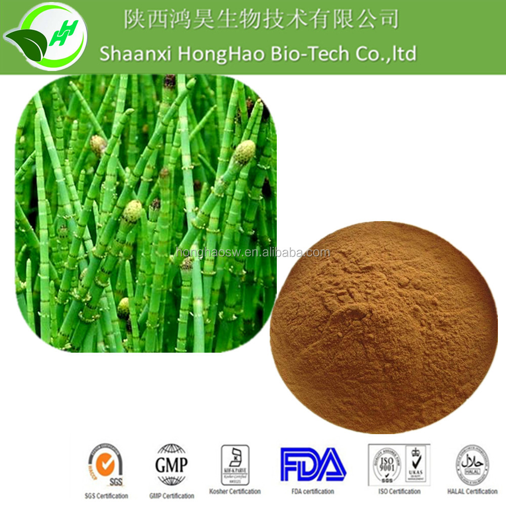 Wholesale price natural Horsetail P.E./ Horsetail Herb Extract / 7% Silica