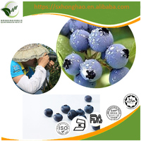 2017 Chinese supplier high-purity organic 25% anthocyanidins bilberry extract powder