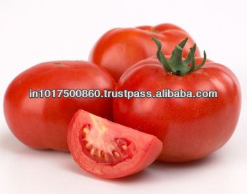 2013 new crop nature/organic pollution-free fresh tomato