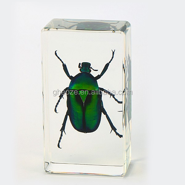 Resin Handcraft Taxidermy Real Insect Specimen Acrylic Insect Blocks Factory