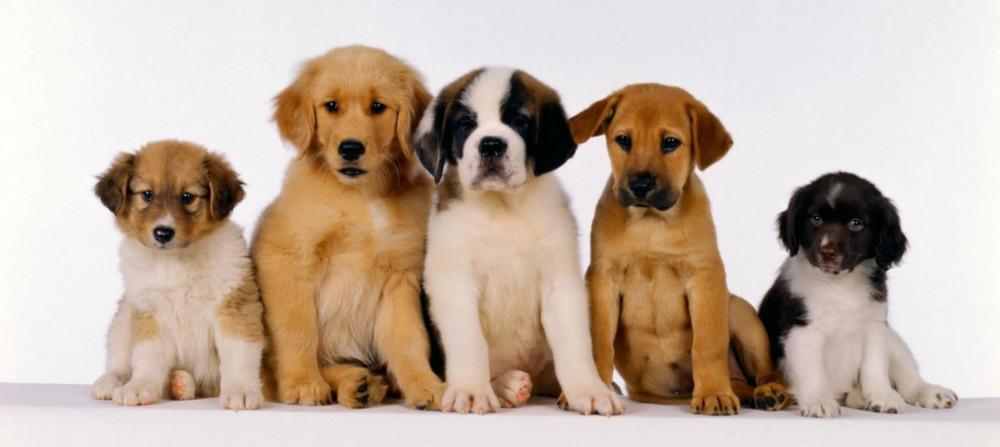 АКАНА / ACANA корм для собак и кошек - купить в Москве