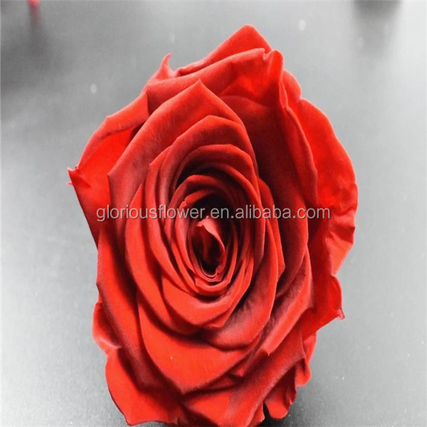 Natural Red Rose Flower Big Head Size Rose Gifts Wedding Flower Bouquet From Local Florist