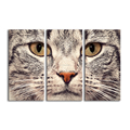 Cat Head Photo Canvas Wall Decor Animal HD Photo Print for Home Decoration Canvas Painting 3-Panel