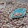 Wholesale China Light Speckled Kidney Beans