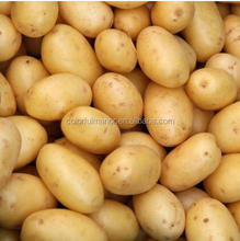 China fresh potato/market price of fresh potato/holland potato for chips