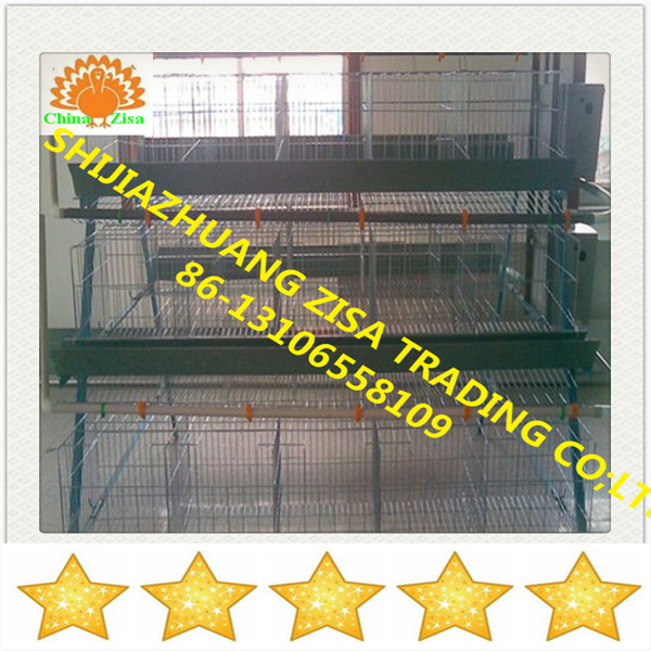 chicken laying egg cages