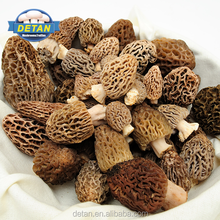 Detan Wild Fresh Morchella Conica Mushrooms