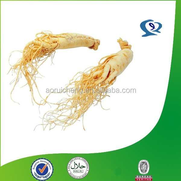 herbal extract manufacturer/ astragalus root p.e/ astragalus root powder