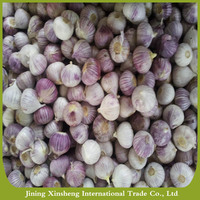 High quality wholesale price fresh natural solo garlic