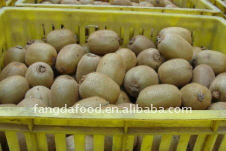 Supply Fresh kiwi fruit price