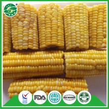 experienced delicious best tasting selling price frozen sweet corns