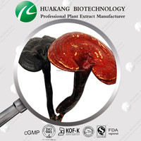 Free Sample High Quality Ganoderma P.E.