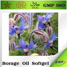 bnp supplier 100% pure Borage oil extract powder