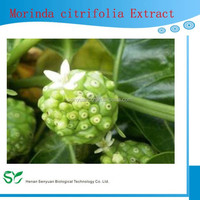 Hot sale! Noni extract powder, Morinda citrifolia extract, Moringa Fruit extract 5:1, 10:1, 20:1