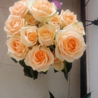 Salable Types Of White Roses High Quality White Roses Fresh Cut Flowers High Quality White Roses from YUNNAN to the departed