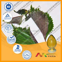 Best selling products Perilla Leaf P.E.,Perilla Leaf extract