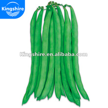 No. 38 Green Chinese Pole Bean Seed