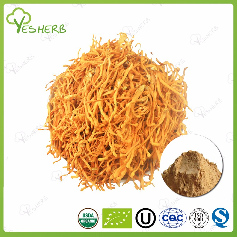 Factory suppliers mushrooms cordyceps cs-4 extract cordyceps sinensis price for health