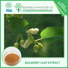China supplier Mulberry Leaf Extract 3% DNJ in bulk with competitive price