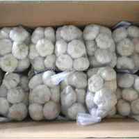 Shandong cheap pure white 6 cm fresh garlic