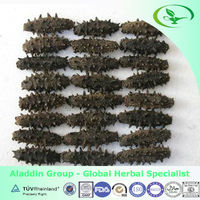 Sea Cucumber Suppliers Wholesale Bulk Sea