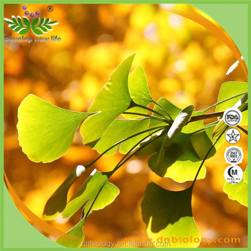 Best Price Natural Ginkgo Biloba extract/24.0%Flavones 6.0% lactones/ginkgo biloba extract 24/6