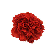 Wholesale wholesale preserved carnation real fresh for choice