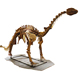 Museum Exhibition High Quality Life Size Dinosaur Skeleton