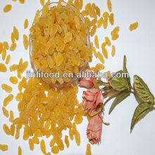Jumbo Dry golden sultana raisins for Dubai