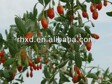 Dried goji berries/Chinese wolfberry/Medlar for hot sale