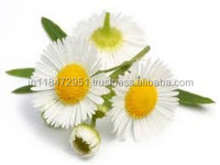 Chamomile Oil Good Quality