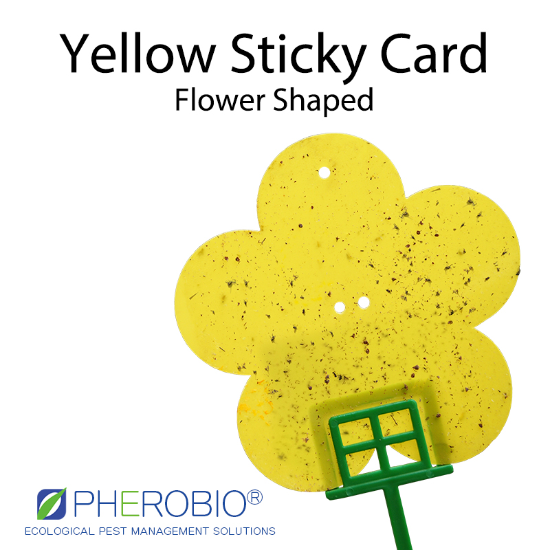 Pest Control Sticky Card Yellow Glue Trap Flower Shape