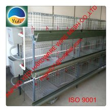 hot!!!!! good selling high quality dove & rabbit cage