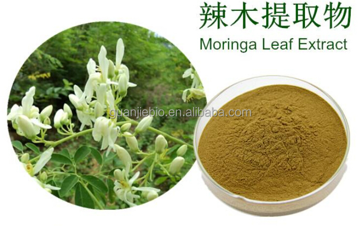 High quality dried Moringa Leaf Extract / Moringa Oleifera Leaf Powder