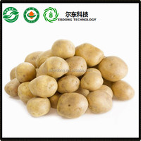 Chinese fresh potatoes exporter cheap price holland potato